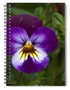 Raindrops On Pansies Spiral Notebook