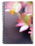 Raindrops On Rare Begoinia Blooms In Macro Spiral Notebook