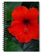 Rainforest Beauty Spiral Notebook