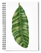 Rainforest Resort - Tropical Banana Leaf  Spiral Notebook