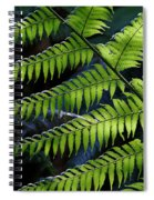 Rainforest Wonder Spiral Notebook