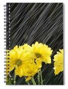 Raining On Yellow Daisies Spiral Notebook