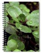 Rainy Day 11 Spiral Notebook