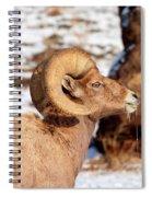 Ram Drool Spiral Notebook