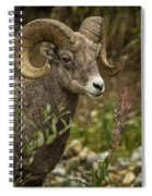 Ram Eating Fireweed Cropped Spiral Notebook