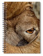 Ram Detail Spiral Notebook