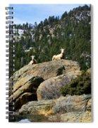 Ram On The Watch Spiral Notebook