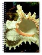 Rams Horn Seashell Spiral Notebook