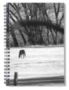 Ranch Horse In The Fields Spiral Notebook