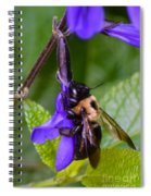 Rappelling Down A Flower Spiral Notebook