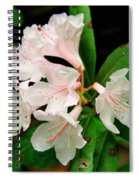 Rare Florida Beauty - Chapmans Rhododendron Spiral Notebook
