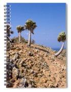 Rare Palm Tress Curacao Spiral Notebook