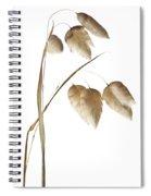 Rattlesnake Grass Number 1 Spiral Notebook