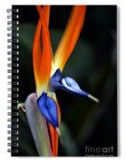 Ready Aim . . .  Spiral Notebook