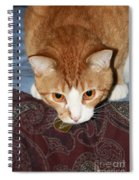 Ready To Pounce Spiral Notebook