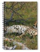 Reclining Cheetah 2 Spiral Notebook
