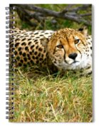 Reclining Cheetah Spiral Notebook