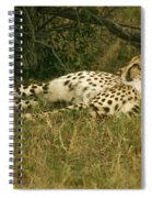 Reclining Cheetah Profile Spiral Notebook