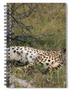 Reclining Cheetah Watching Spiral Notebook