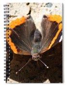 Red Admiral Close Spiral Notebook