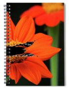Red Admiral Nectaring On Tithonia Spiral Notebook