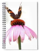 Red Admiral On Echinacea Spiral Notebook