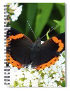 Red Admiral - Topwings Spiral Notebook