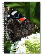 Red Admiral - Underside Spiral Notebook
