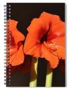 Red Amaryllis Spiral Notebook