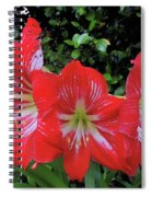 Red Amaryllis Trio Spiral Notebook