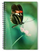 Red And Black Butterfly On White Flower Spiral Notebook