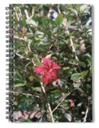 Red And Green Spiral Notebook
