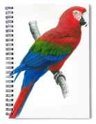 Red And Green Macaw Spiral Notebook