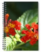 Red And Orange Lantana Spiral Notebook