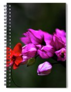 Red And Pink Spiral Notebook