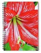 Red And White Beauty Spiral Notebook
