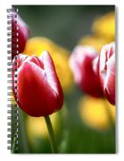 Red And White Tulips Large Canvas Art, Canvas Print, Large Art, Large Wall Decor, Home Decor Spiral Notebook