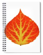 Red And Yellow Aspen Leaf 10 Spiral Notebook