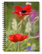 Red Anemone Coronaria In Nature Spiral Notebook