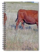 Red Angus Cow And Calf Spiral Notebook