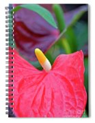 Red Anthurium Flower Spiral Notebook