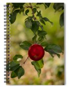Red Apple Ready For Picking Spiral Notebook