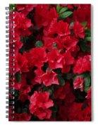 Red Azalea Blooms Spiral Notebook