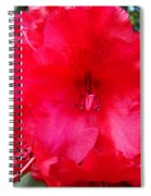 Red Azaleas Flowers 4 Red Azalea Garden Giclee Art Prints Baslee Troutman Spiral Notebook