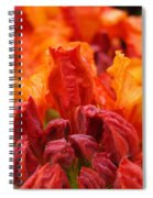 Red Azaleas Orange Azalea Flowers 9 Floral Giclee Art Prints Baslee Troutman Spiral Notebook