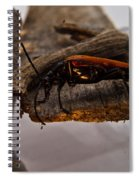 Red Beetle At Twlight Spiral Notebook