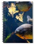 Red Bellied Piranha Fishes Spiral Notebook