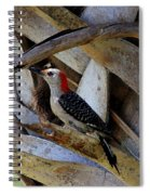 Red-bellied Woodpecker Hides On A Cabbage Palm Spiral Notebook