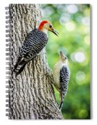 Red-bellied Woodpeckers Spiral Notebook