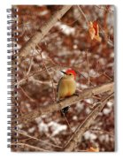 Red Belly Spiral Notebook